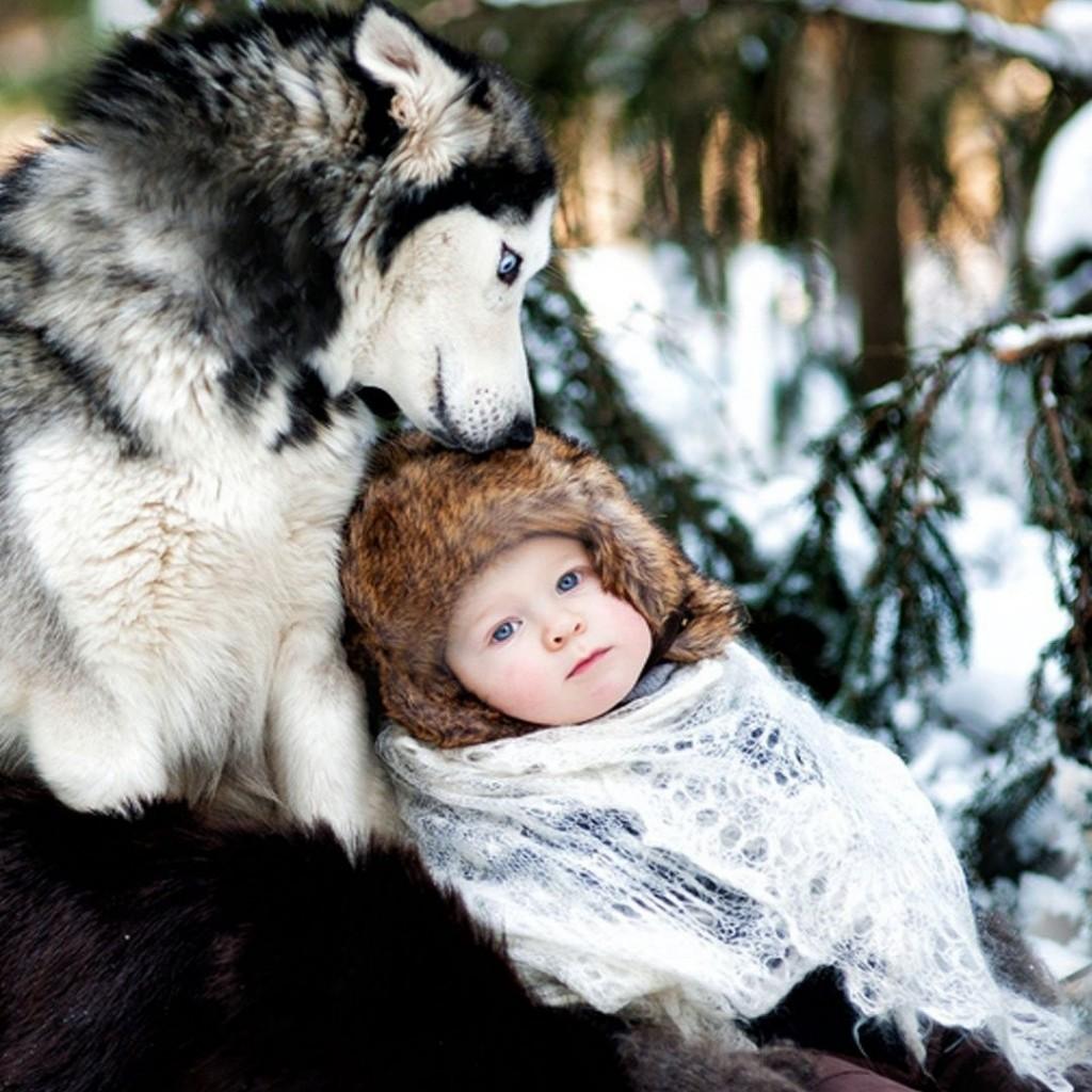 dog_husky_baby_care